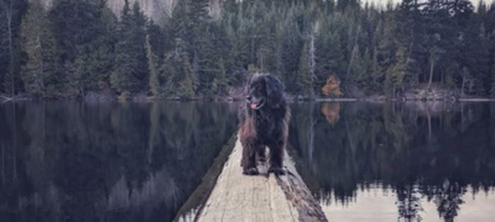 Evolution is Your Pet-Friendly Hotel in Whistler